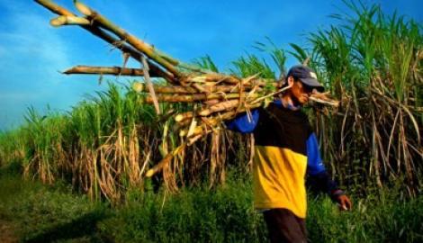 Foto Berita Ketemu Dahlan, Petani Tebu 'Curhat' Soal Serbuan Gula Rafinasi