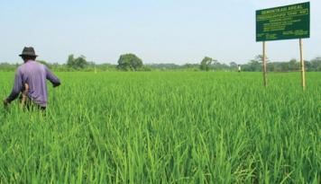 Foto Dinas Pertanian Sumut Berikan Bantuan Alsintan ke Kabupaten Tobasa