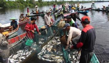 Foto Omzet Pasar Ikan Rejomulyo di Semarang Rp2 Miliar/Malam