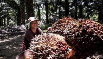 Foto Bakrie Plantations Raih Penjualan Rp770 Miliar