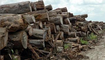 Foto Indonesia Raih Lisensi Ekspor kayu ke Eropa