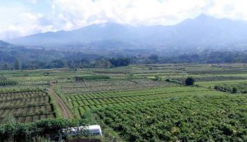 Foto Jokowi: Reforma Agraria Atasi Ketimpangan Ekonomi Pedesaan