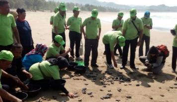 Foto PJB Lepas 800 Anak Penyu di Pantai Pacitan