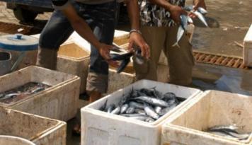 Foto Cuaca Ekstrem, Harga Ikan Merangkak Naik