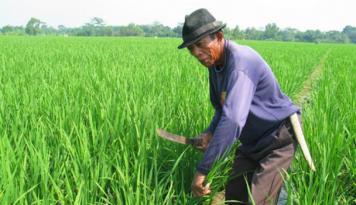 Foto Mukomuko Targetkan Pembangunan Jaringan Irigasi Tuntas dalam 60 Hari