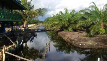 Foto Audit Perkebunan Sawit Kotawaringin Timur Mulai Oktober